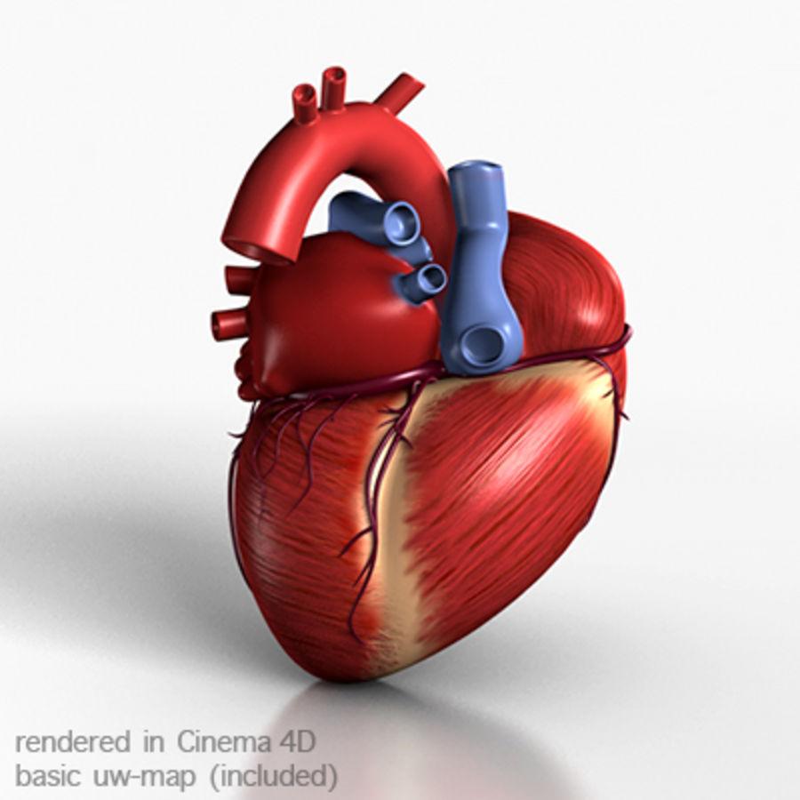 mänskligt hjärta royalty-free 3d model - Preview no. 5