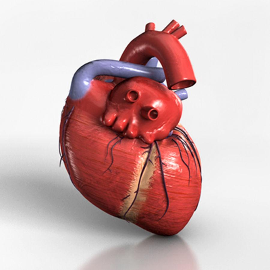mänskligt hjärta royalty-free 3d model - Preview no. 6