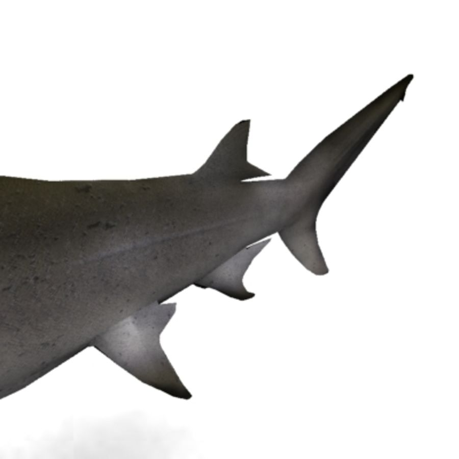 hammerhead shark royalty-free 3d model - Preview no. 4