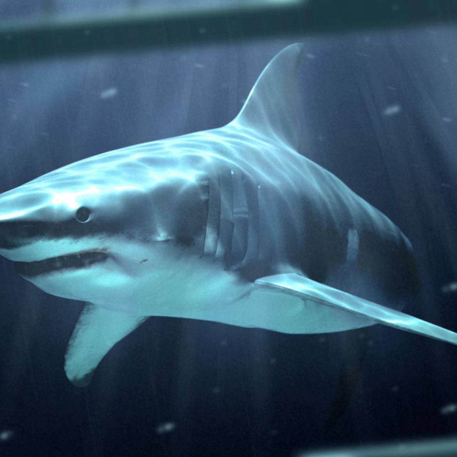 White Shark royalty-free 3d model - Preview no. 1