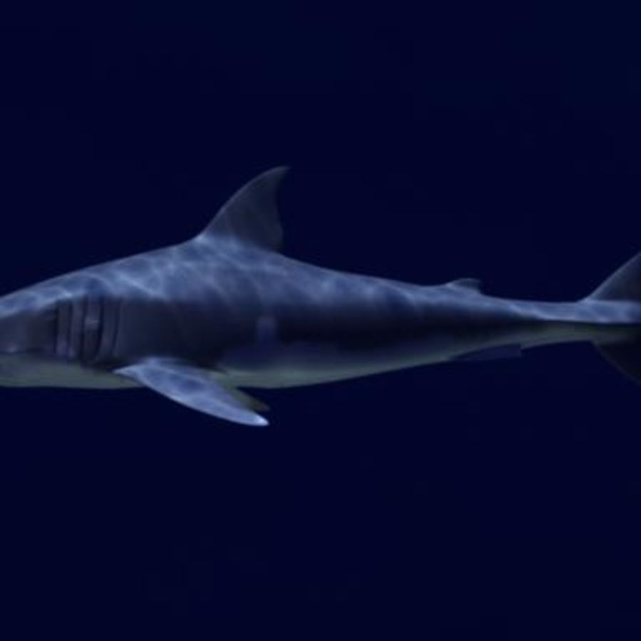 White Shark royalty-free 3d model - Preview no. 3