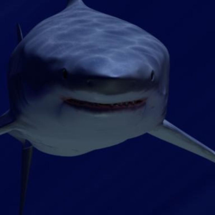 White Shark royalty-free 3d model - Preview no. 2