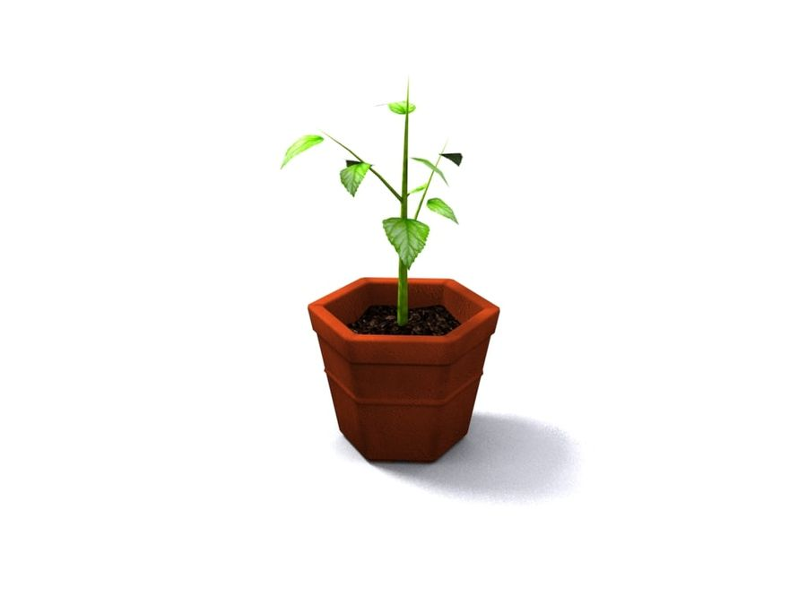 Plant Pot royalty-free 3d model - Preview no. 1