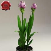 울금 Alismatifolia (시암 튤립) 3d model