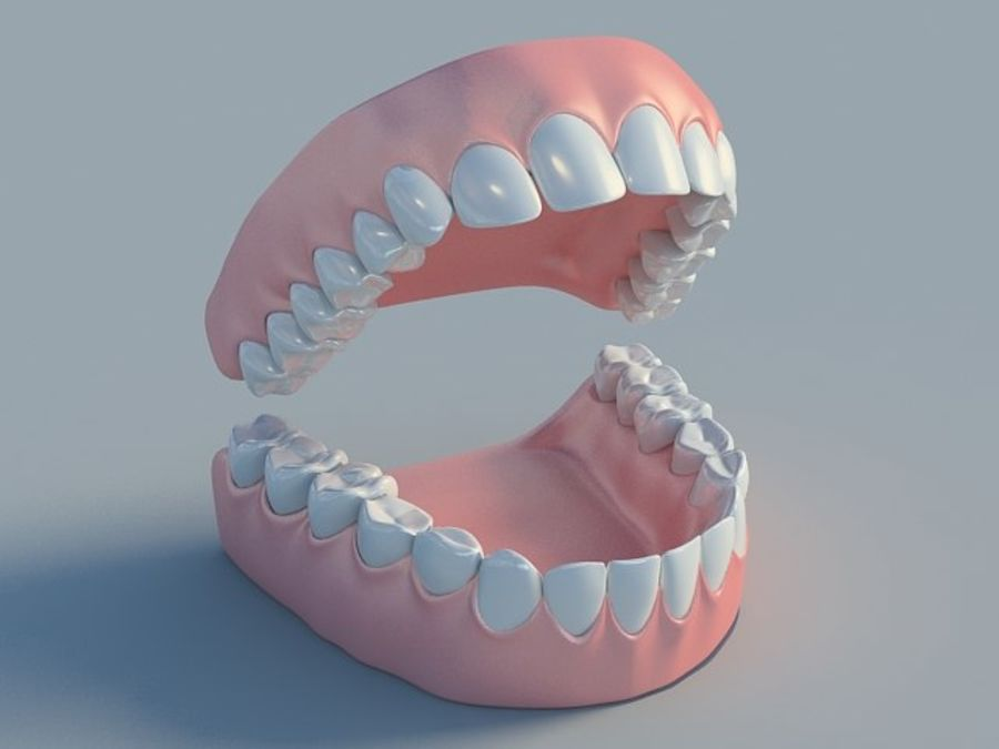 人类的牙齿 royalty-free 3d model - Preview no. 3