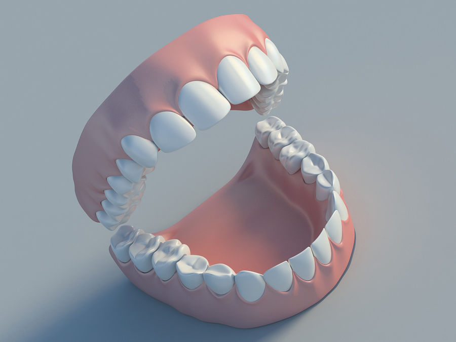 人类的牙齿 royalty-free 3d model - Preview no. 1