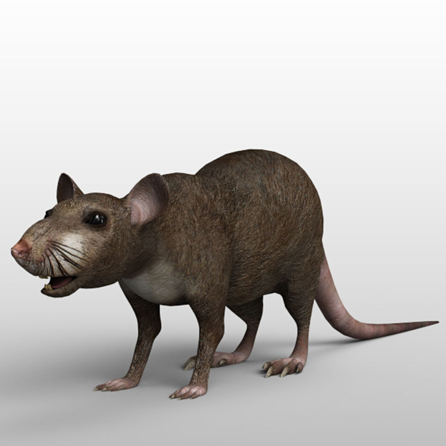 Rato royalty-free 3d model - Preview no. 2