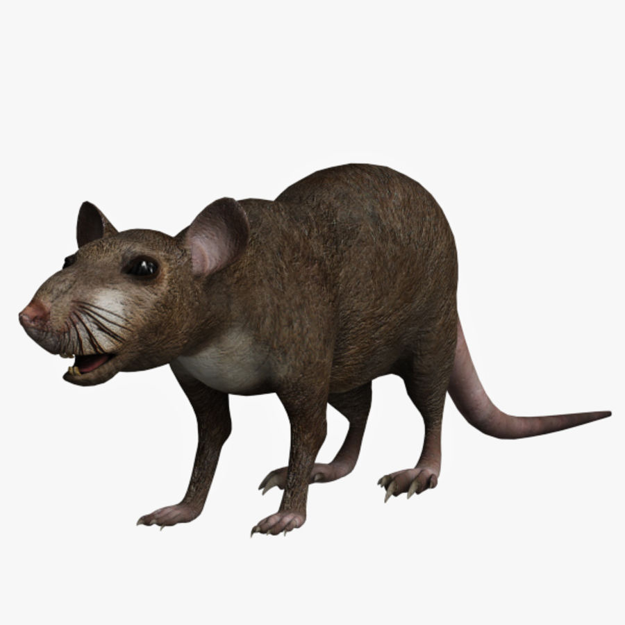 Rat royalty-free 3d model - Preview no. 1
