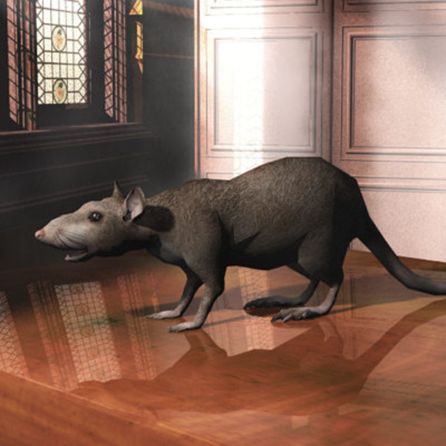 Rat royalty-free 3d model - Preview no. 6