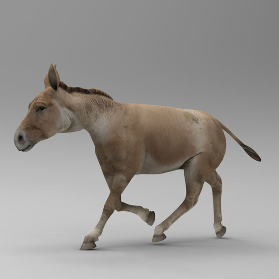 Donkey for Poser royalty-free 3d model - Preview no. 2