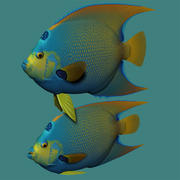 Koningin angelfish 3d model