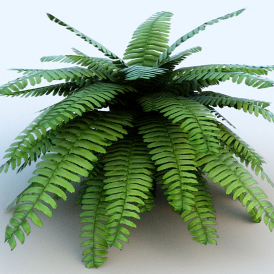 Fern # 1 royalty-free 3d model - Preview no. 2