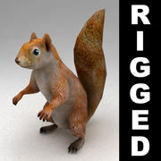 Squirrel rigged 3d model