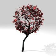 丸カエデの木 3d model