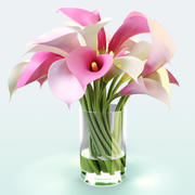 Callas Lily color bouquet 3d model