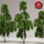 Low-Poly Birch Trees-collectie 3d model