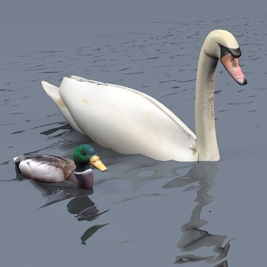 swan duck animal royalty-free 3d model - Preview no. 1