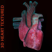3D Сердце Текстурированное 3d model
