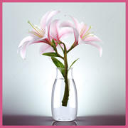 Lily branch 3d model