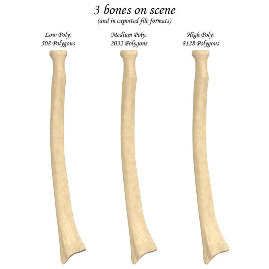 Radius Bone 3d Model 39 Oth Obj 3ds Fbx X Free3d