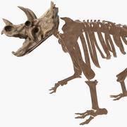 Squelette Triceratops 3d model