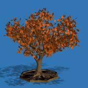 PL 오크 나무 3d model