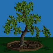 PL Krzywe Drzewo 3d model