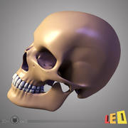 人类头骨 3d model