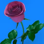 Ros rosa 3d model