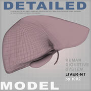 Highly Detailed Liver-NT(1) 3d model