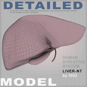 Foie-NT très détaillé (1) 3d model