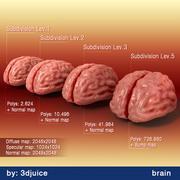 Gehirn 3d model