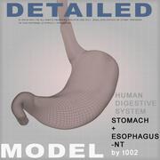 非常に詳細な胃NT(1) 3d model