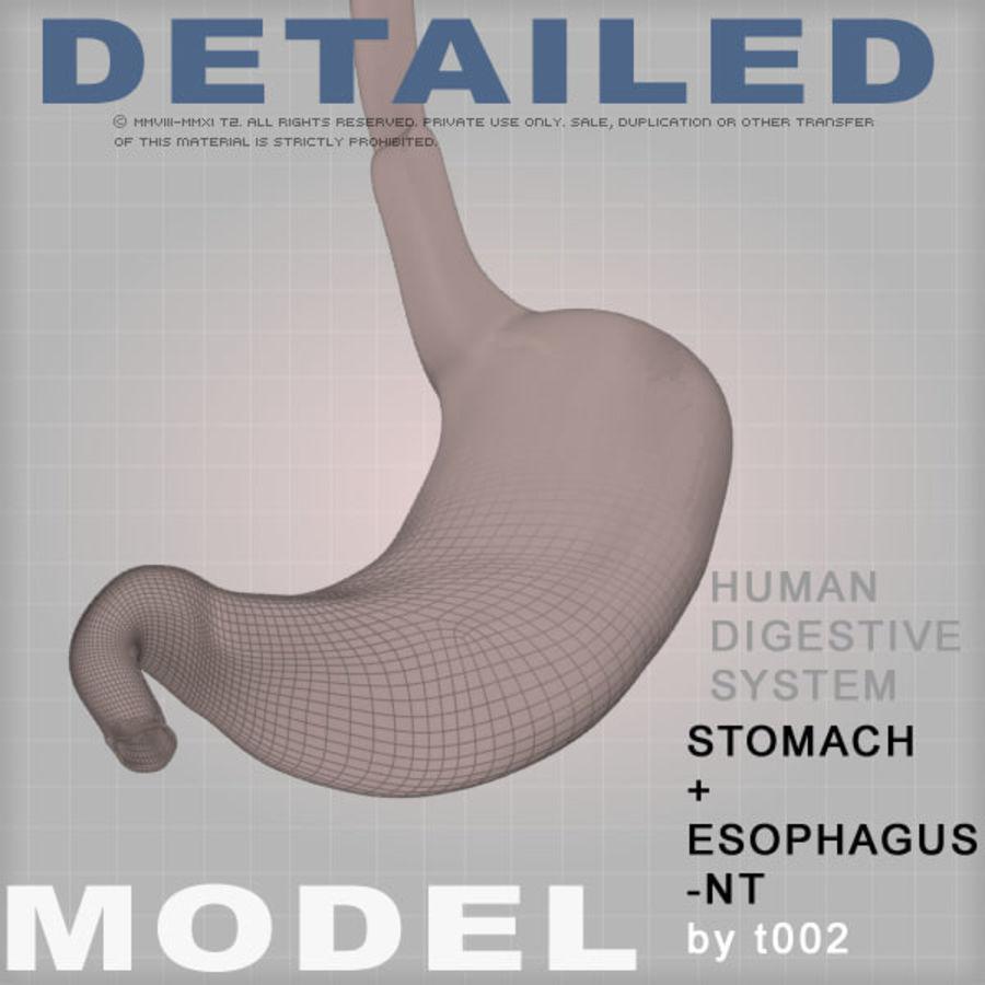 Zeer gedetailleerde maag-NT (1) royalty-free 3d model - Preview no. 1