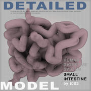 Highly Detailed Small Intestine-NT 3d model