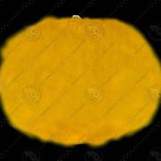 レモンフルーツ+ボーナス 3d model