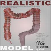 Zeer gedetailleerde colon 3d model
