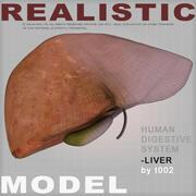 Zeer gedetailleerde lever 3d model