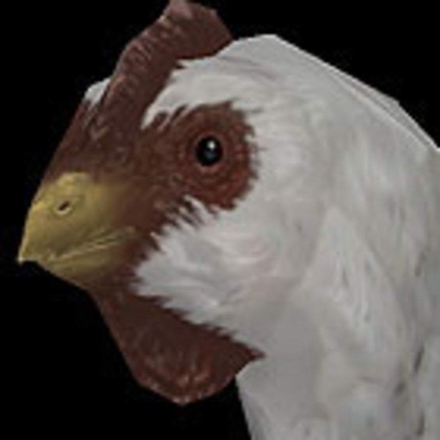 Poulet Blanc royalty-free 3d model - Preview no. 1