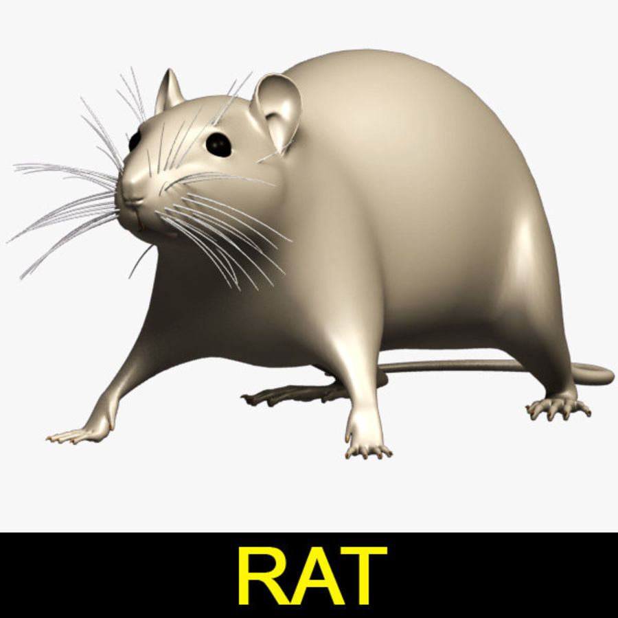 Rat royalty-free 3d model - Preview no. 1