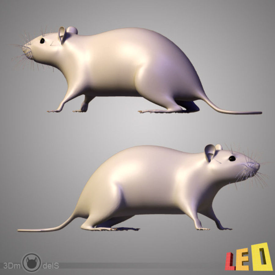 Rato royalty-free 3d model - Preview no. 3