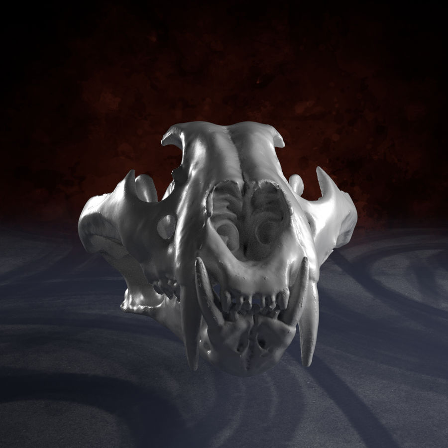 Scan von Tiger Skull royalty-free 3d model - Preview no. 2