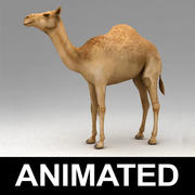Dromedary camel animated 3d model