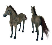 Horse andalusian 3d model