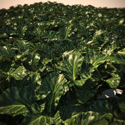 Vegetação HQ - Planta 1 3d model