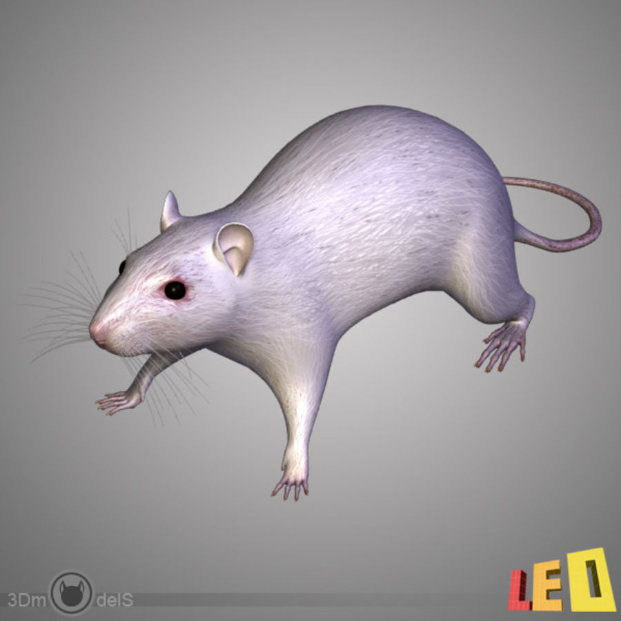 Rat (textured)) royalty-free 3d model - Preview no. 2