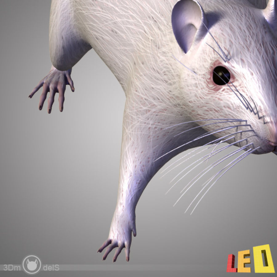 Rat (textured)) royalty-free 3d model - Preview no. 9