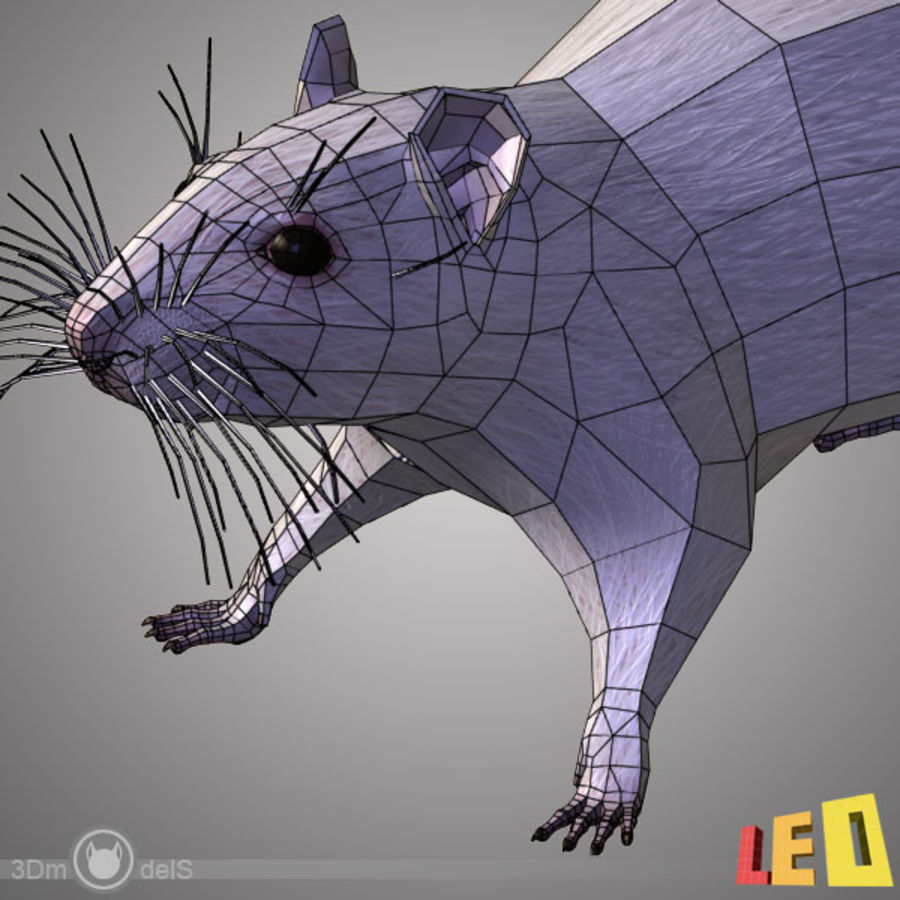 Rat (textured)) royalty-free 3d model - Preview no. 12