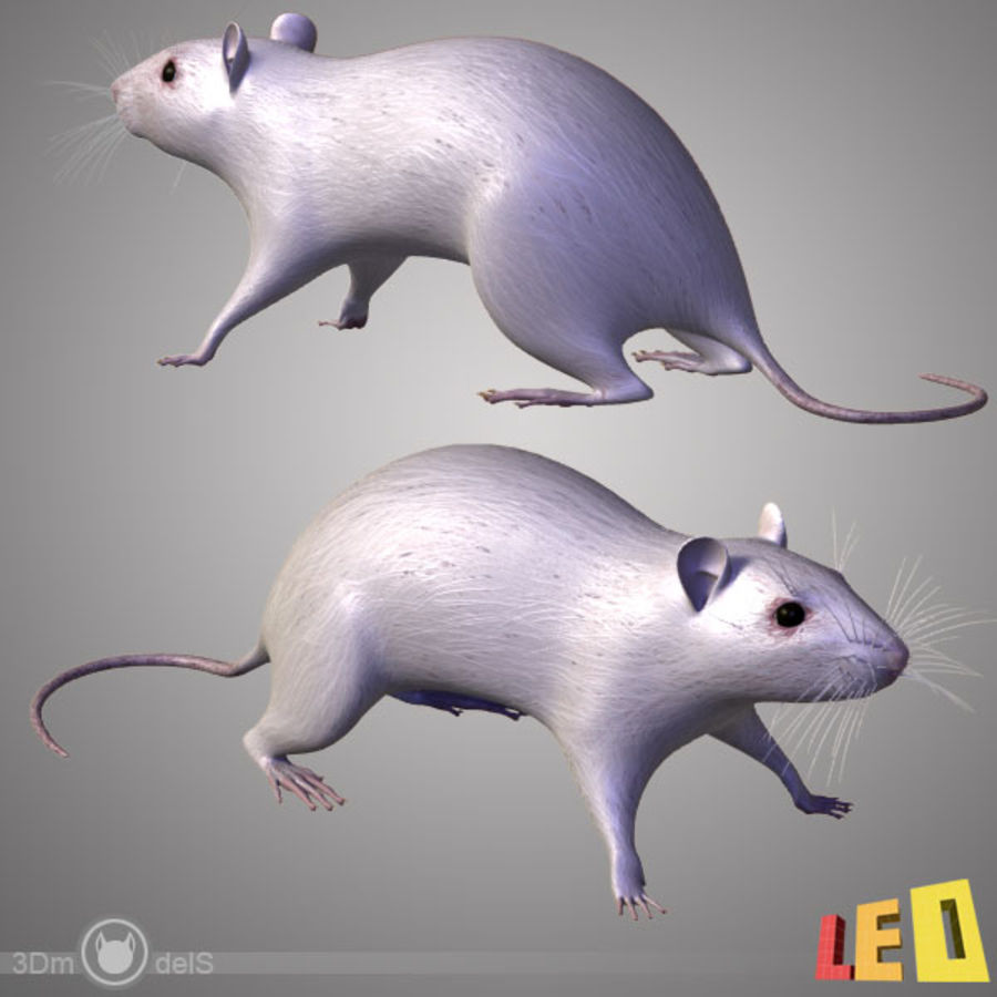 Rat (textured)) royalty-free 3d model - Preview no. 5