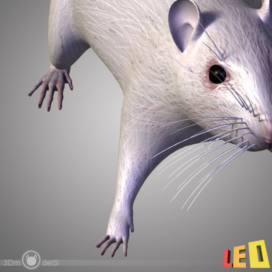 Råtta (texturerat)) royalty-free 3d model - Preview no. 9